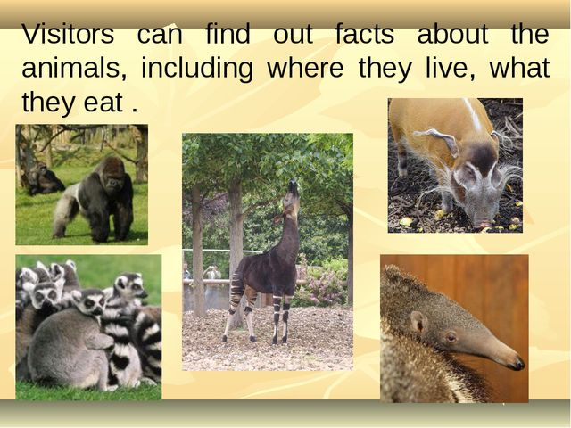 Visitors can find out facts about the animals, including where they live, wha...