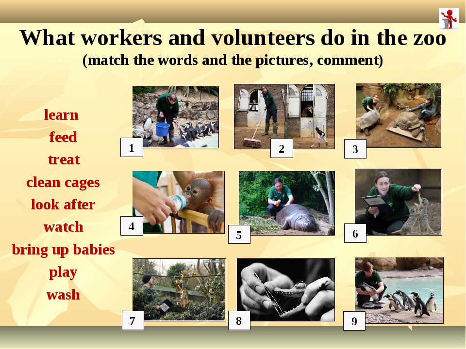 1 2 3 5 6 7 8 What workers and volunteers do in the zoo (match the words and...