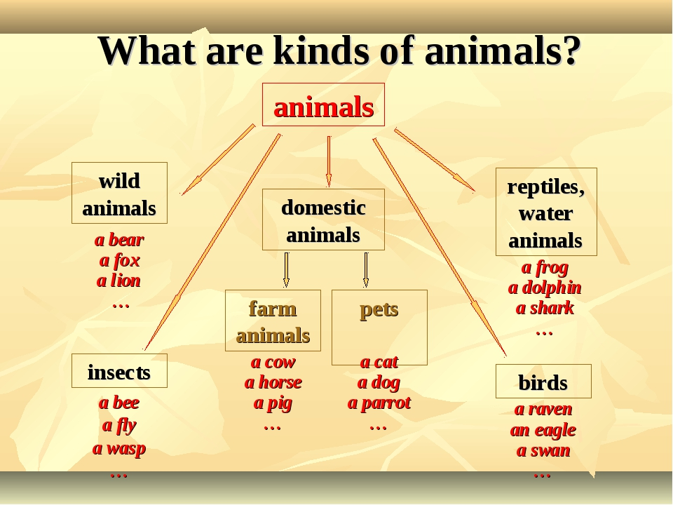 What are kinds of animals? insects birds pets farm animals reptiles,water ani...