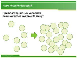 Размножение бактерий При благоприятных условиях размножаются каждые 30 минут