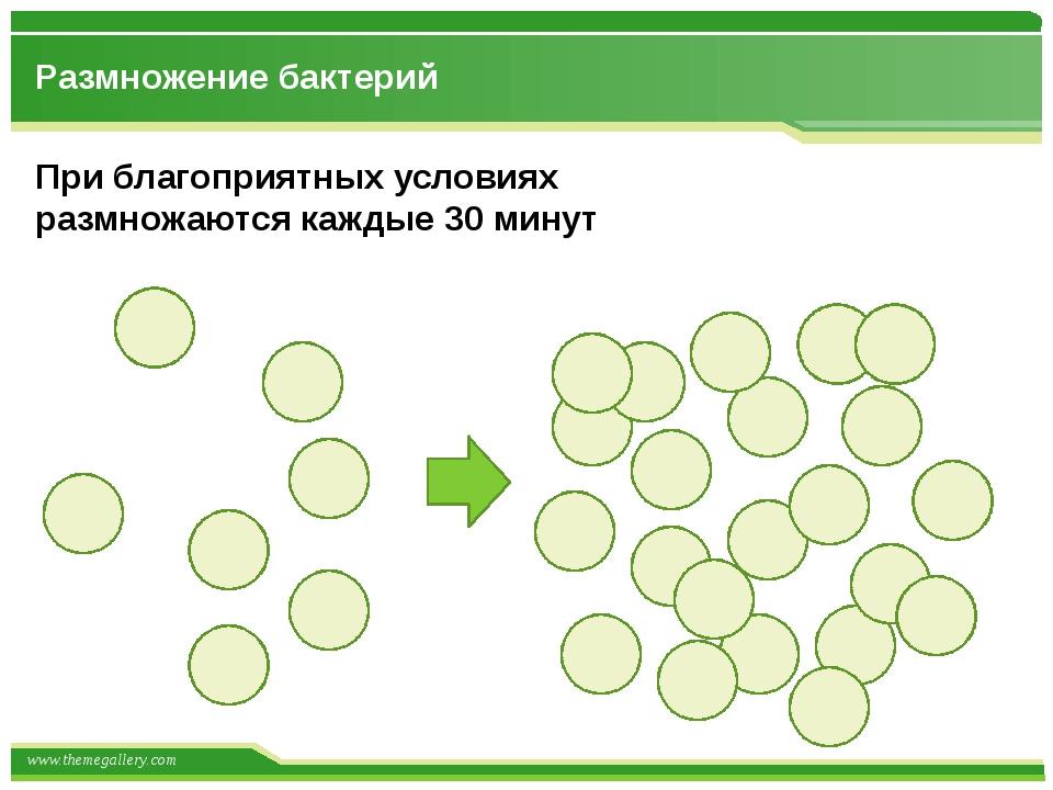 Размножение бактерий При благоприятных условиях размножаются каждые 30 минут...