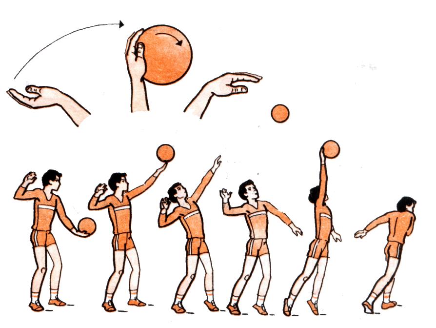 По Физической Культуре На Тему Волейбол Скачать Бесплатно Реферат По Физической Культуре На Тему Волейбол Скачать Бесплатно