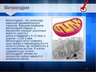 Митохондрии Митохондрии – это органоиды имеющие двухмембранное строение. Вне