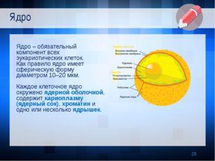 Ядро – обязательный компонент всех эукариотических клеток. Как правило ядро