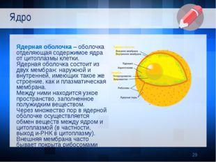 Ядерная оболочка – оболочка отделяющая содержимое ядра от цитоплазмы клетки.