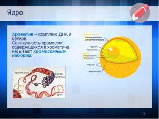 Хроматин – комплекс ДНК и белков. Совокупность хромосом, содержащихся в хром
