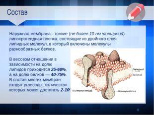 Состав Наружная мембрана - тонкие (не более 10 нм толщиной) липопротеидная п