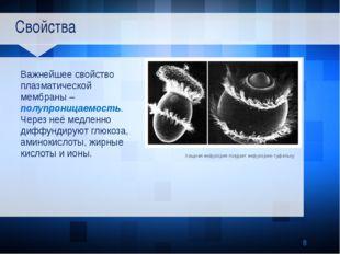 Свойства Важнейшее свойство плазматической мембраны – полупроницаемость. Чер