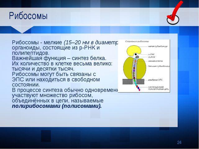 Рибосомы Рибосомы - мелкие (15–20нм в диаметре) органоиды, состоящие из р-Р...
