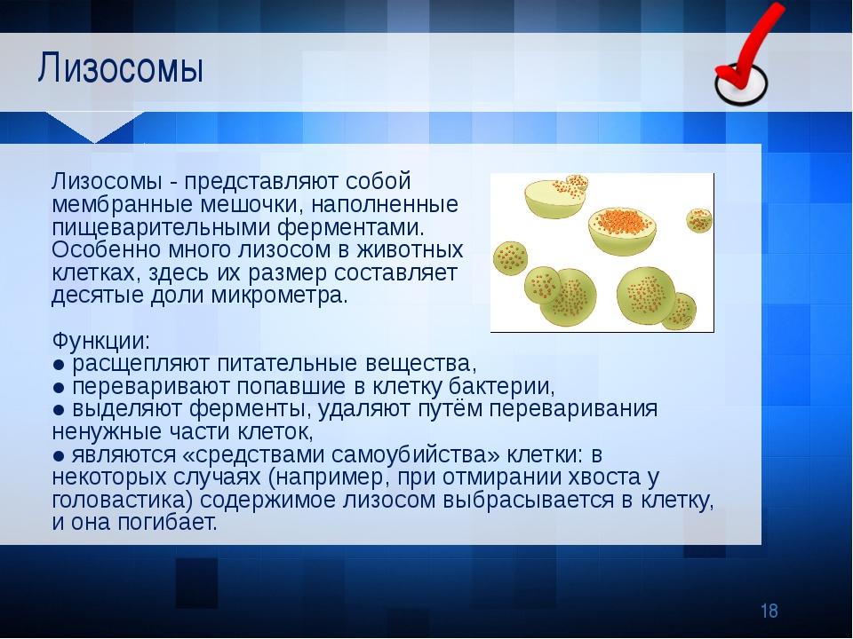 Лизосомы Лизосомы - представляют собой мембранные мешочки, наполненные пищев...