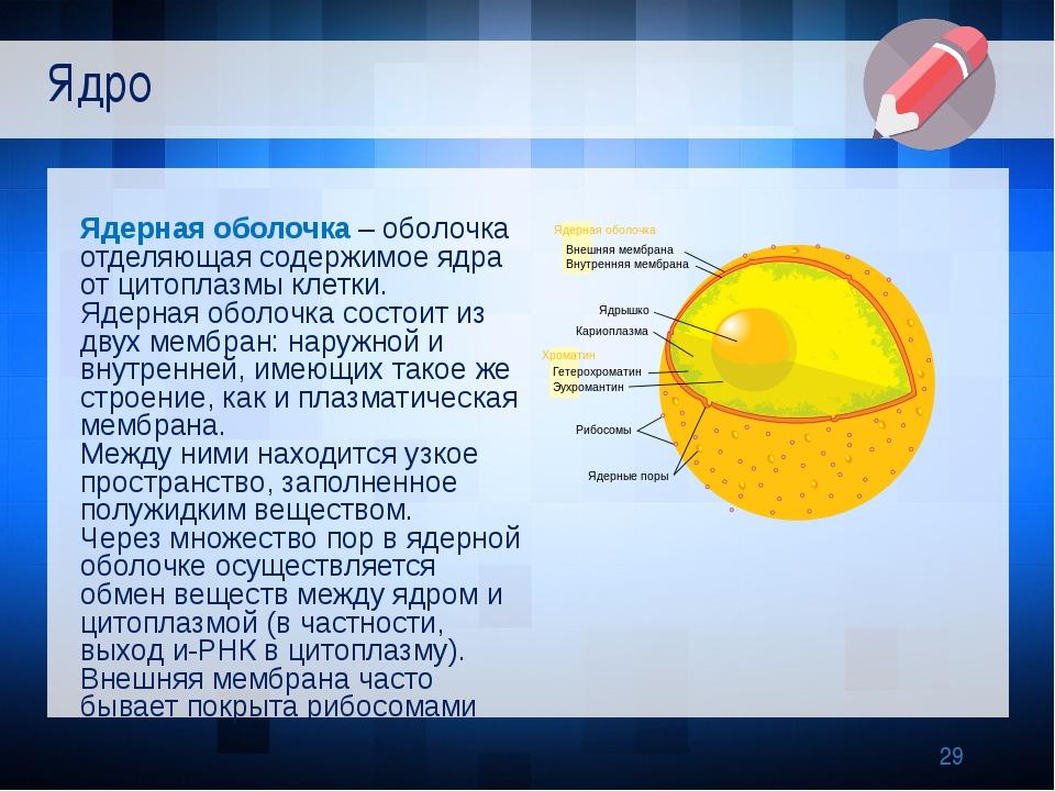 Ядерная оболочка – оболочка отделяющая содержимое ядра от цитоплазмы клетки....