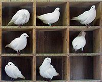 C:\Documents and Settings\Ирина\Рабочий стол\200px-Pigeons-in-holes.jpg