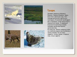 Тундра. Занимает северное побережье Евразии, Северной Америки. Здесь много бо