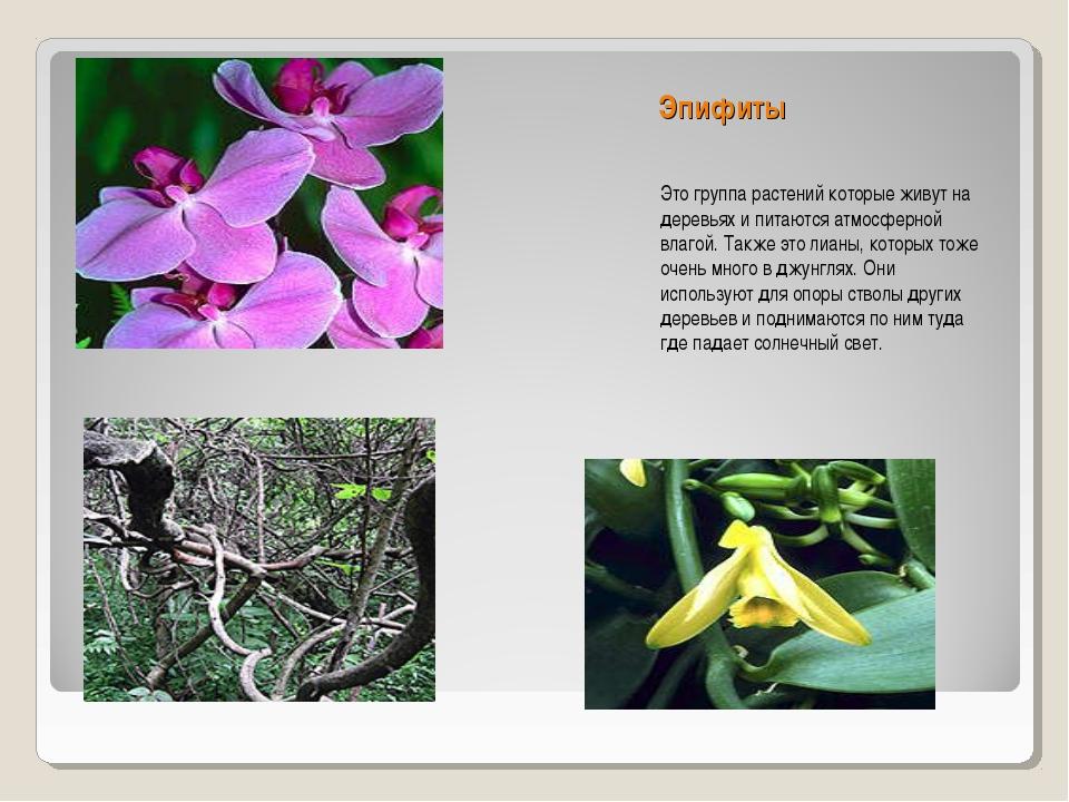 Эпифиты Это группа растений которые живут на деревьях и питаются атмосферной...