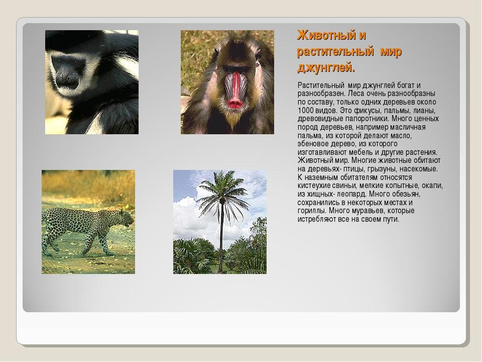Животный и растительный мир джунглей. Растительный мир джунглей богат и разно...