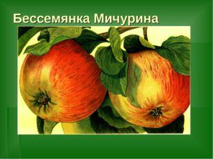 Бессемянка Мичурина
