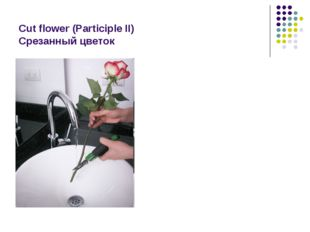 Cut flower (Participle II) Срезанный цветок