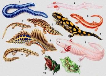 http://900igr.net/datai/biologija/Klass-zemnovodnye-amfibii/0002-003-Klass-zemnovodnye-amfibii.jpg