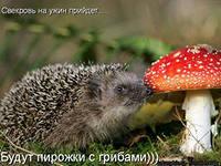 http://im6-tub-kz.yandex.net/i?id=138044221-58-72&n=21