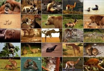 http://i575.photobucket.com/albums/ss191/basketofcandles/Mammals.jpg