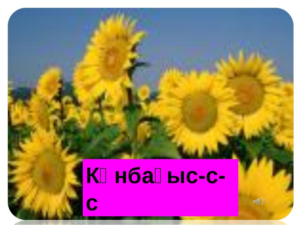 Күнбағыс-с-с