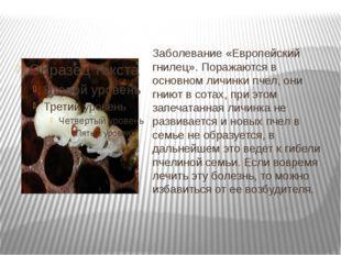 Заболевание «Европейский гнилец». Поражаются в основном личинки пчел, они гни