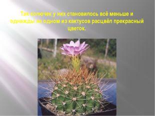 Так колючек у них становилось всё меньше и однажды на одном из кактусов расцв