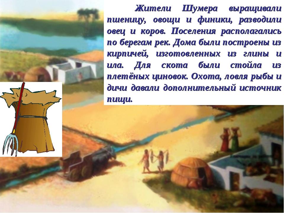 Жители Шумера выращивали пшеницу, овощи и финики, разводили овец и коров. По...