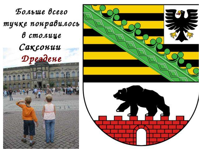 Больше всего тучке понравилось в столице Саксонии Дрездене