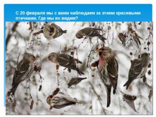С 20 февраля мы с вами наблюдаем за этими красивыми птичками. Где мы их видим