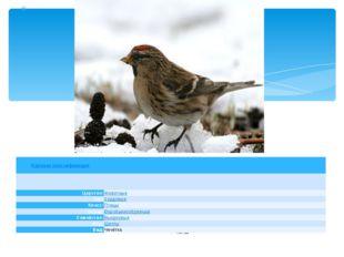Научная классификация Царство: Животные Тип: Хордовые Класс: Птицы Отряд: Во