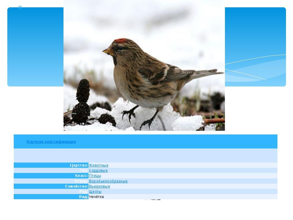 Научная классификация Царство: Животные Тип: Хордовые Класс: Птицы Отряд: Во...