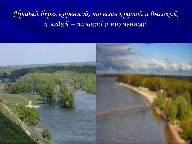 Правый берег коренной, то есть крутой и высокий, а левый – пологий и низменный.