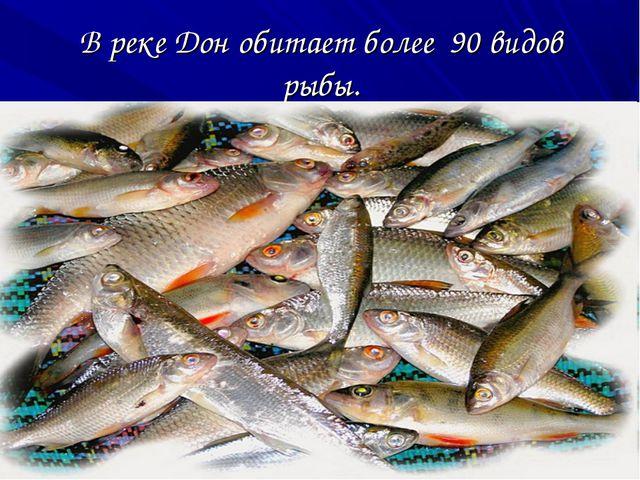 В реке Дон обитает более 90 видов рыбы.