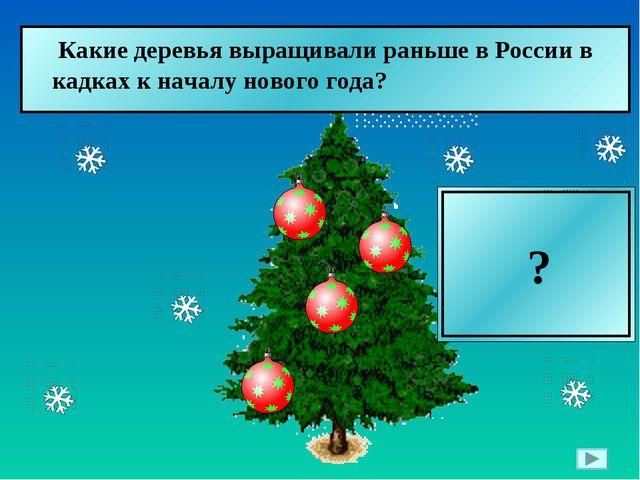 Вишни  Какие деревья выращивали раньше в России в кадках к началу нового го...