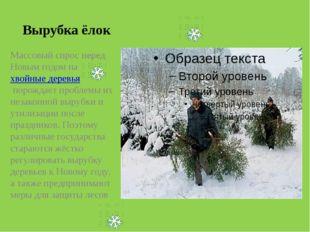 Вырубка ёлок Массовый спрос перед Новым годом нахвойные деревьяпорождает пр