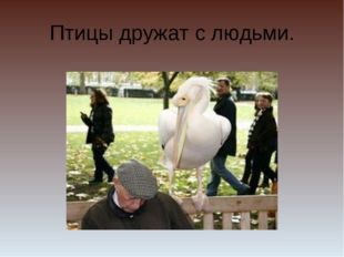 Птицы дружат с людьми.