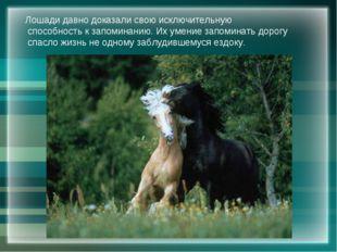 Лошади давно доказали свою исключительную способность к запоминанию. Их умени