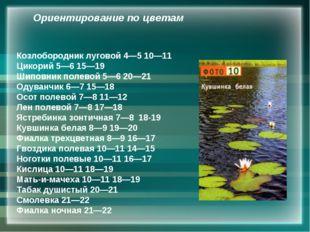 Козлобородник луговой 4—5 10—11 Цикорий 5—6 15—19 Шиповник полевой 5—6 20—21