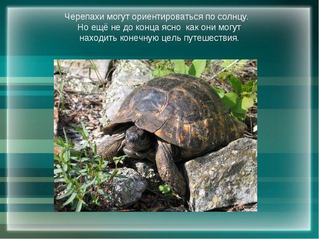 Черепахи могут ориентироваться по солнцу. Но ещё не до конца ясно как они мог...