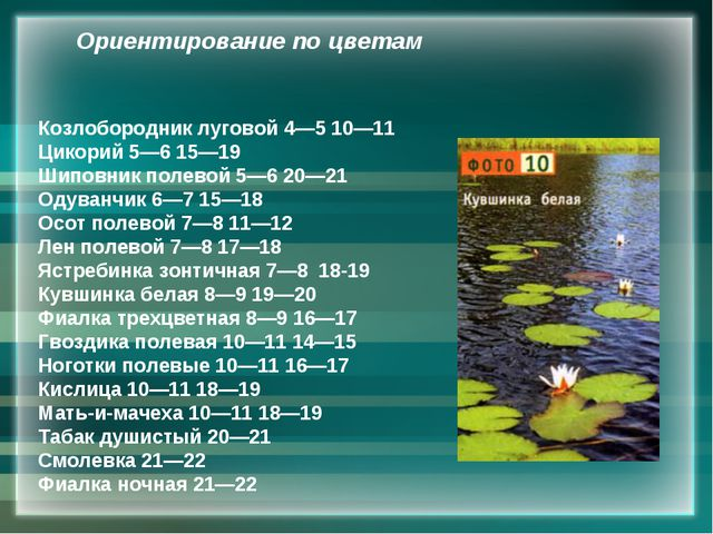 Козлобородник луговой 4—5 10—11 Цикорий 5—6 15—19 Шиповник полевой 5—6 20—21...