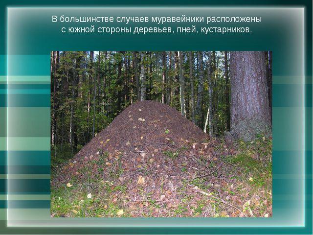 В большинстве случаев муравейники расположены с южной стороны деревьев, пней,...