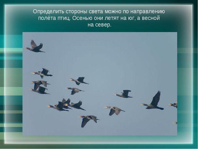 Определить стороны света можно по направлению полёта птиц. Осенью они летят н...