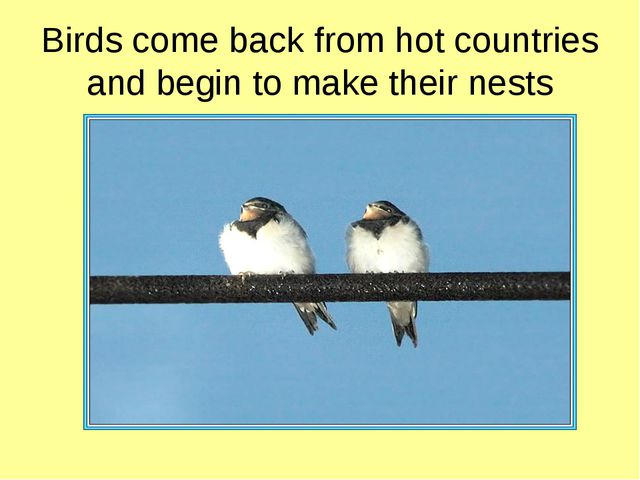 Birds come back from hot countries and begin to make their nests