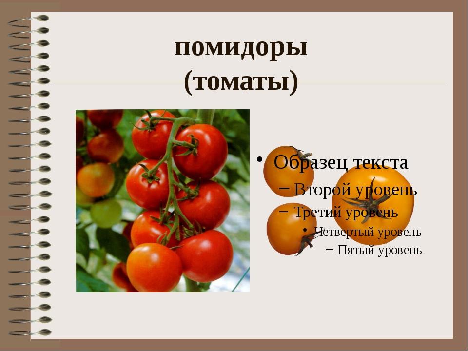 помидоры (томаты)