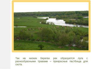 Так на низких берегах рек образуются луга с разнообразными травами – прекрасн