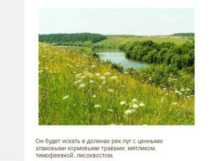 Он будет искать в долинах рек луг с ценными злаковыми кормовыми травами: мятл
