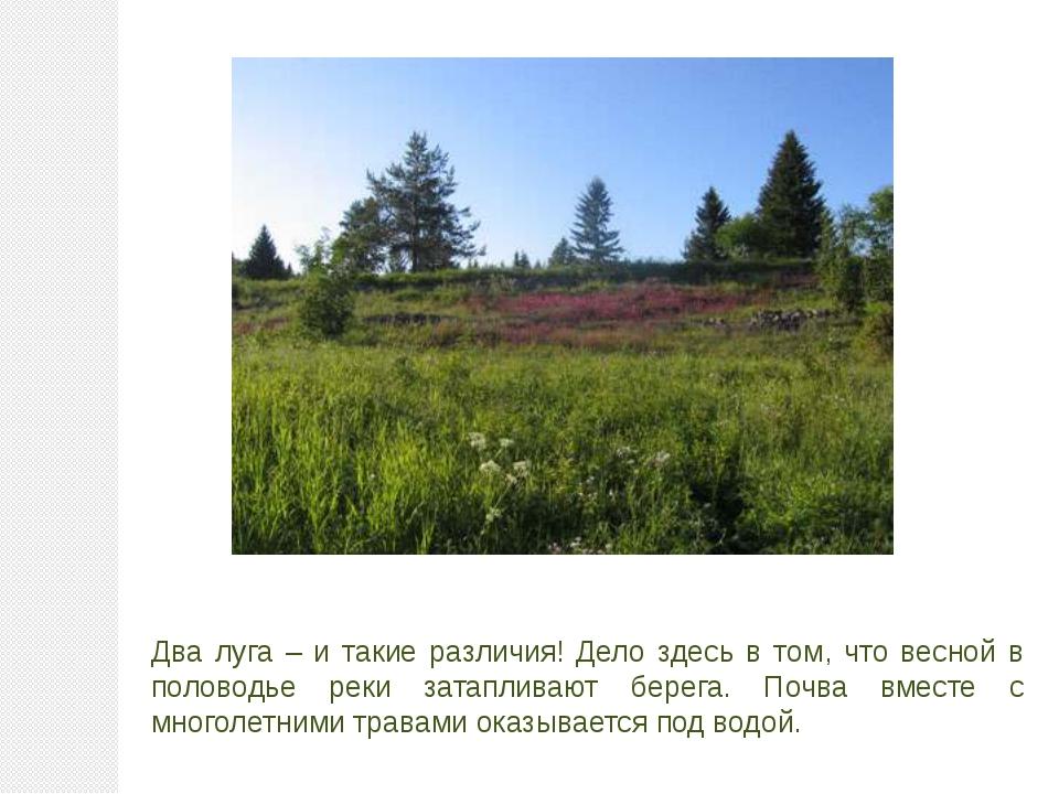 Два луга – и такие различия! Дело здесь в том, что весной в половодье реки за...
