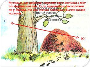с ю Муравьи, как правило, строят свои жилища к югу от дерева или пня. Если м