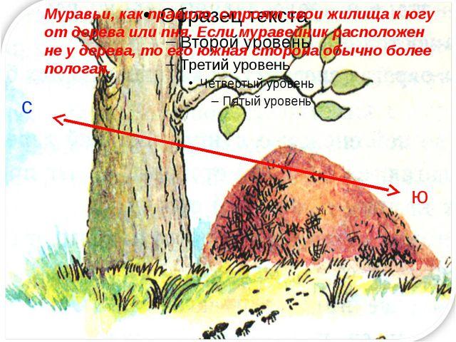 с ю Муравьи, как правило, строят свои жилища к югу от дерева или пня. Если м...